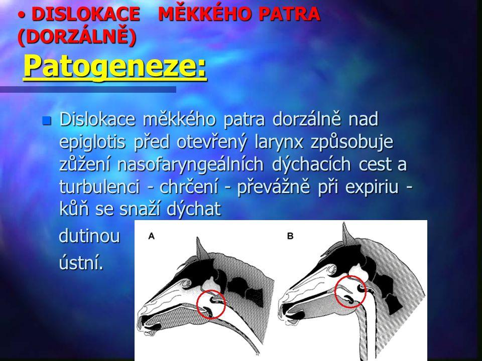 DISLOKACE MĚKKÉHO PATRA (DORZÁLNĚ) Patogeneze: DISLOKACE MĚKKÉHO PATRA (DORZÁLNĚ) Patogeneze: n Dislokace měkkého patra dorzálně nad epiglotis před otevřený larynx způsobuje zůžení nasofaryngeálních dýchacích cest a turbulenci - chrčení - převážně při expiriu - kůň se snaží dýchat dutinou dutinou ústní.
