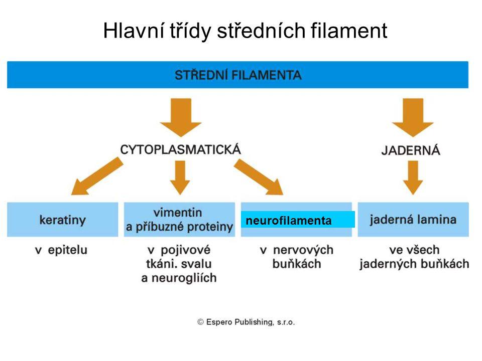 Hlavní třídy středních filament neurofilamenta