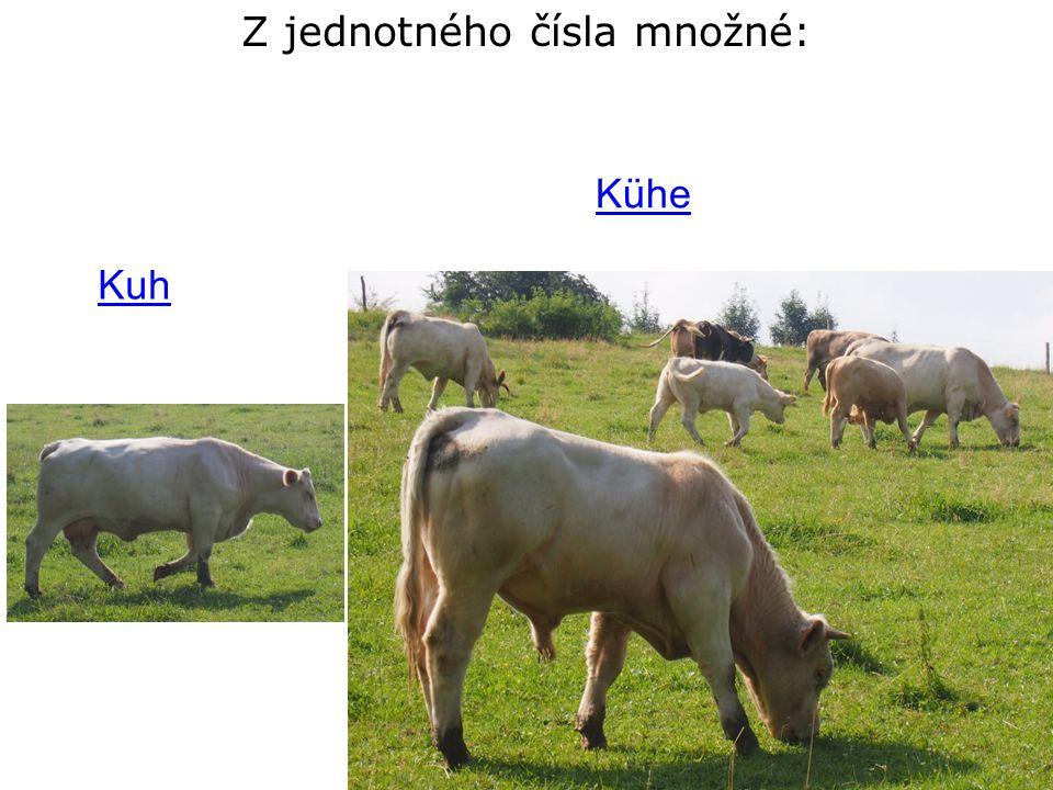 Z jednotného čísla množné: Kuh Kühe