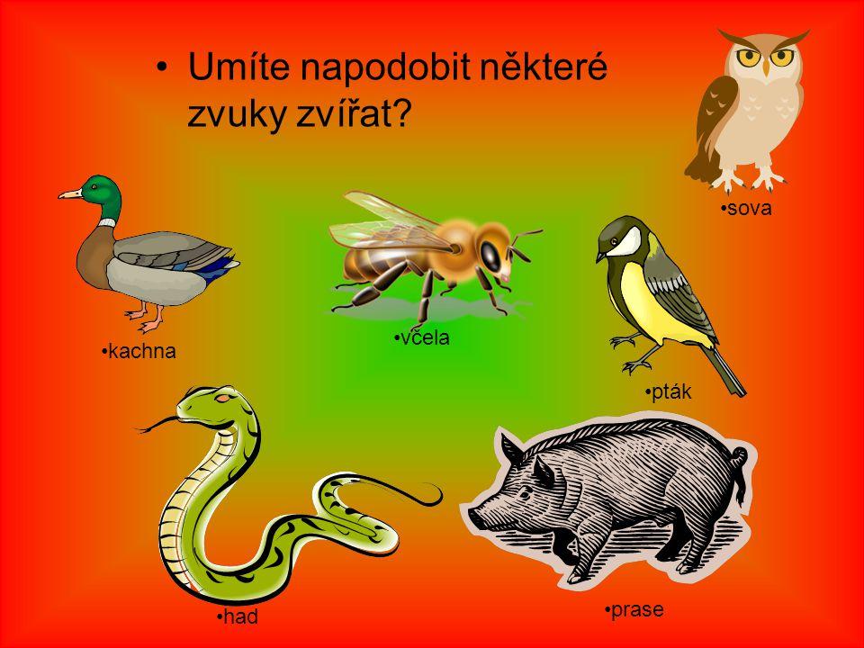 Umíte napodobit některé zvuky zvířat? kachna včela pták sova prase had