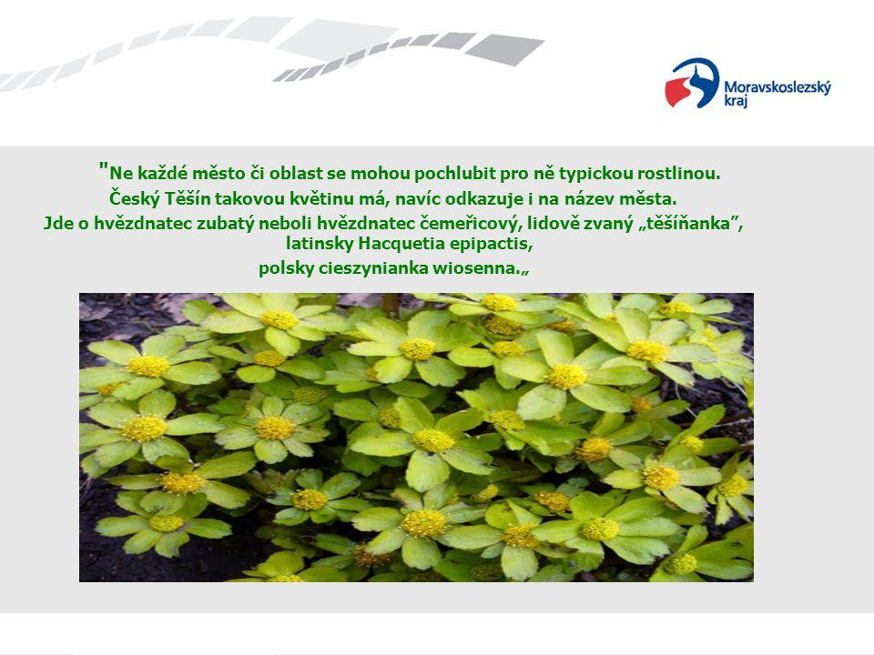Ne každé město či oblast se mohou pochlubit pro ně typickou rostlinou.