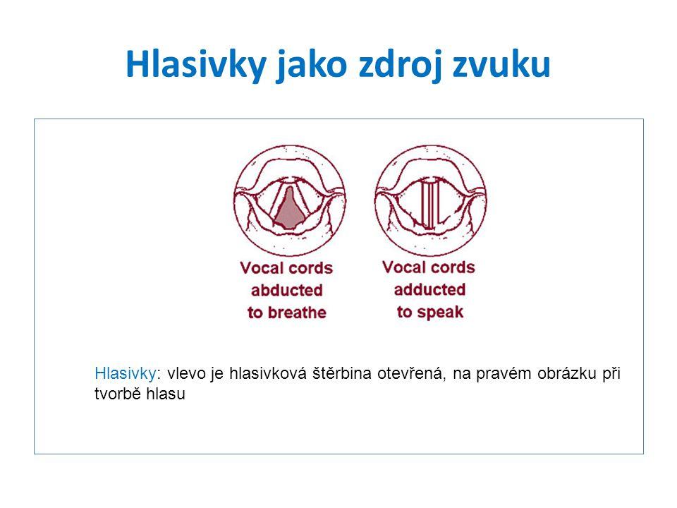 Hlasivky jako zdroj zvuku Hlasivky: vlevo je hlasivková štěrbina otevřená, na pravém obrázku při tvorbě hlasu