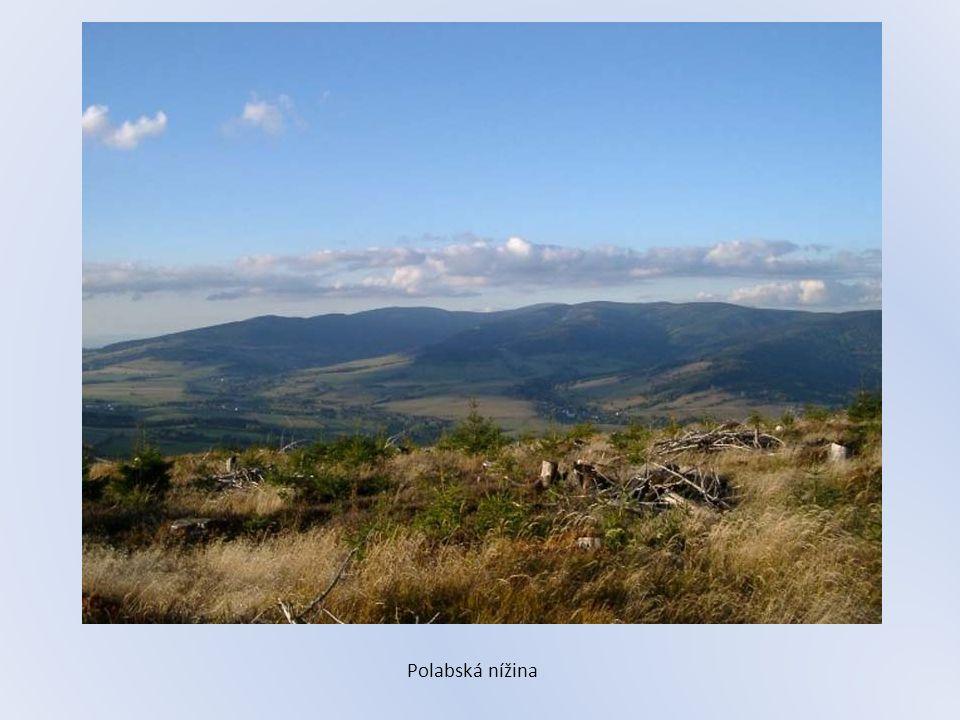 Polabská nížina