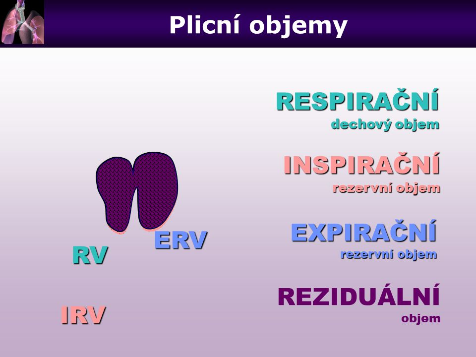 RESPIRAČNÍ dechový objem INSPIRAČNÍ rezervní objem EXPIRAČNÍ REZIDUÁLNÍ objem RV IRV ERV Plicní objemy