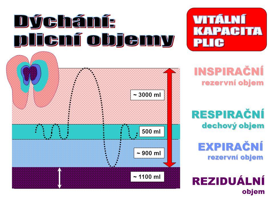 RESPIRAČNÍ dechový objem INSPIRAČNÍ rezervní objem EXPIRAČNÍ REZIDUÁLNÍ objem ~ 3000 ml 500 ml ~ 900 ml ~ 1100 ml