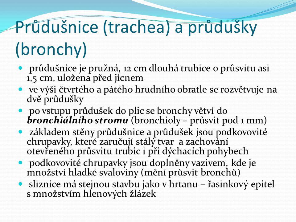 Průdušnice (trachea) a průdušky (bronchy) průdušnice je pružná, 12 cm dlouhá trubice o průsvitu asi 1,5 cm, uložena před jícnem ve výši čtvrtého a pát