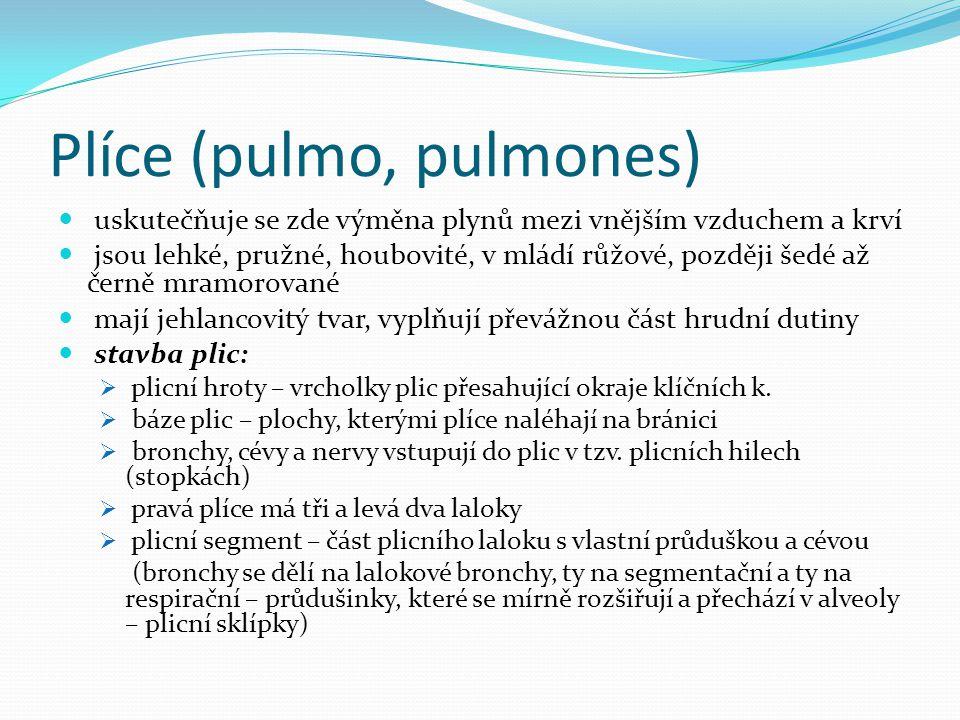 Plíce (pulmo, pulmones) uskutečňuje se zde výměna plynů mezi vnějším vzduchem a krví jsou lehké, pružné, houbovité, v mládí růžové, později šedé až če