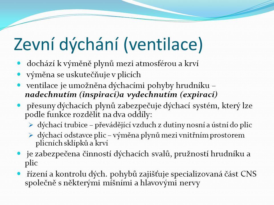 Zevní dýchání (ventilace) dochází k výměně plynů mezi atmosférou a krví výměna se uskutečňuje v plicích ventilace je umožněna dýchacími pohyby hrudník