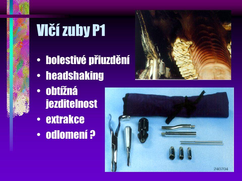 Vlčí zuby P1 bolestivé přiuzdění headshaking obtížná jezditelnost extrakce odlomení ?