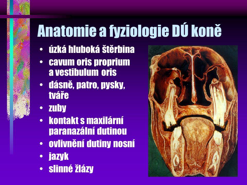 Anatomie a fyziologie DÚ koně úzká hluboká štěrbina cavum oris proprium a vestibulum oris dásně, patro, pysky, tváře zuby kontakt s maxilární paranazální dutinou ovlivnění dutiny nosní jazyk slinné žlázy