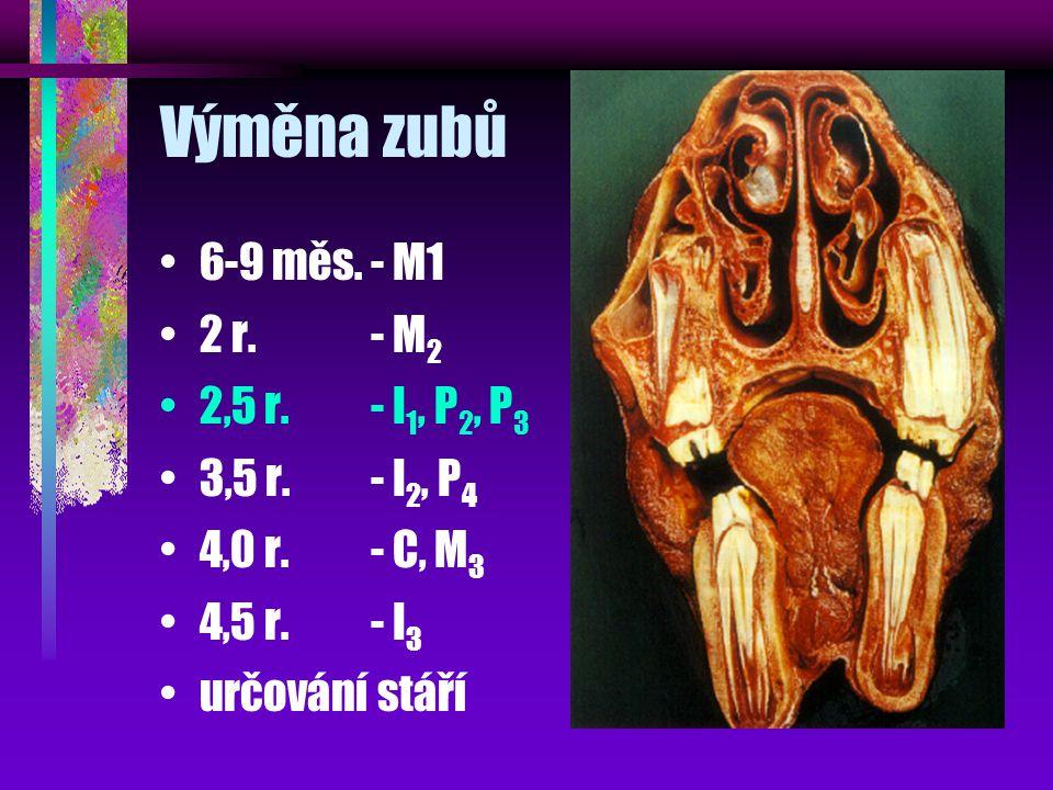 Výměna zubů 6-9 měs.- M1 2 r.- M 2 2,5 r.- I 1, P 2, P 3 3,5 r.- I 2, P 4 4,0 r.- C, M 3 4,5 r.- I 3 určování stáří
