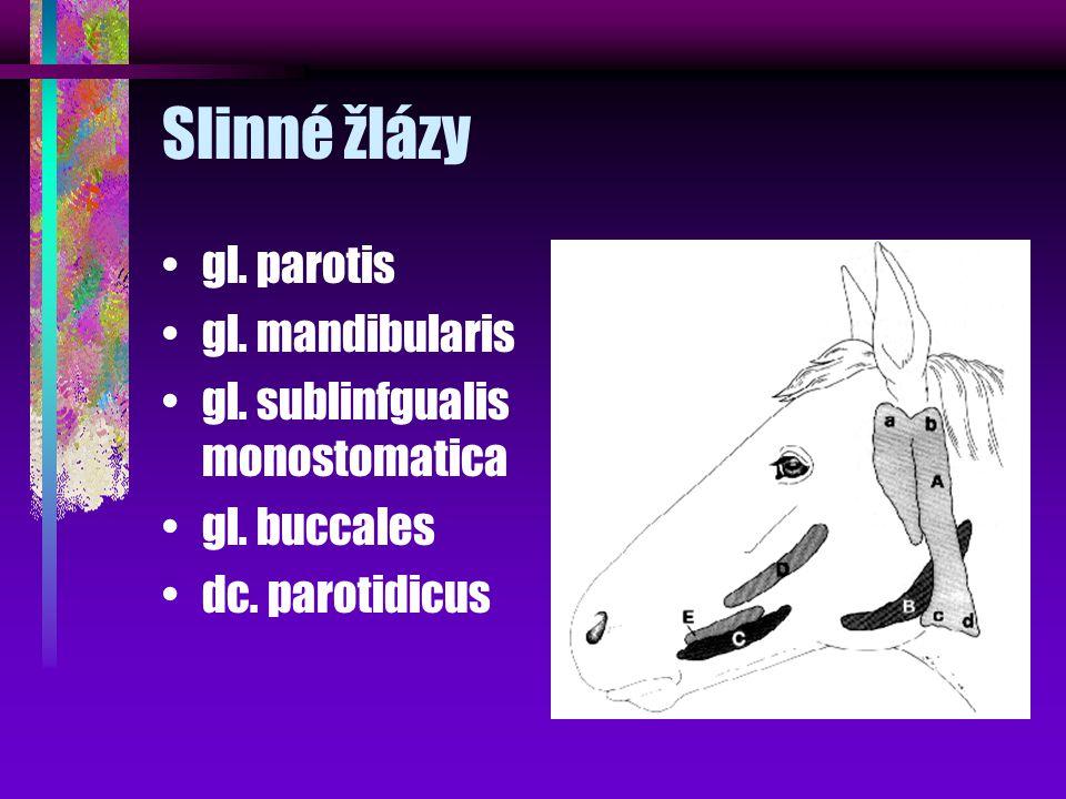Slinné žlázy gl. parotis gl. mandibularis gl. sublinfgualis monostomatica gl. buccales dc. parotidicus