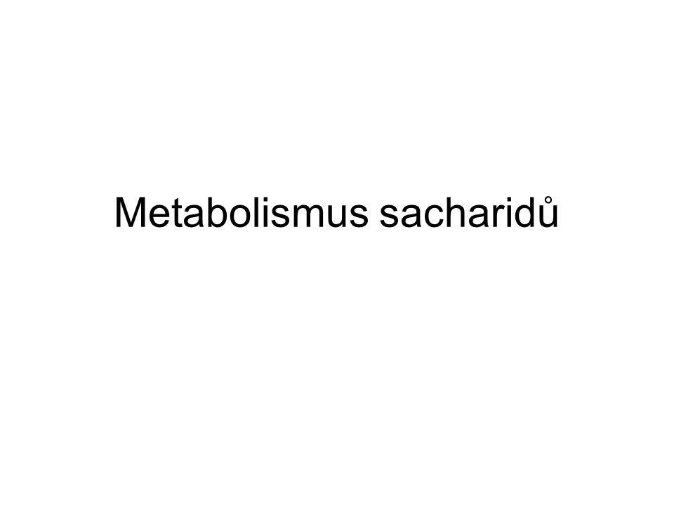"""Pentosový cyklus převod """"energie ze sacharidů na redukční činidlo NADPH + H + –> biosyntéza lipidů, steroidů,..."""
