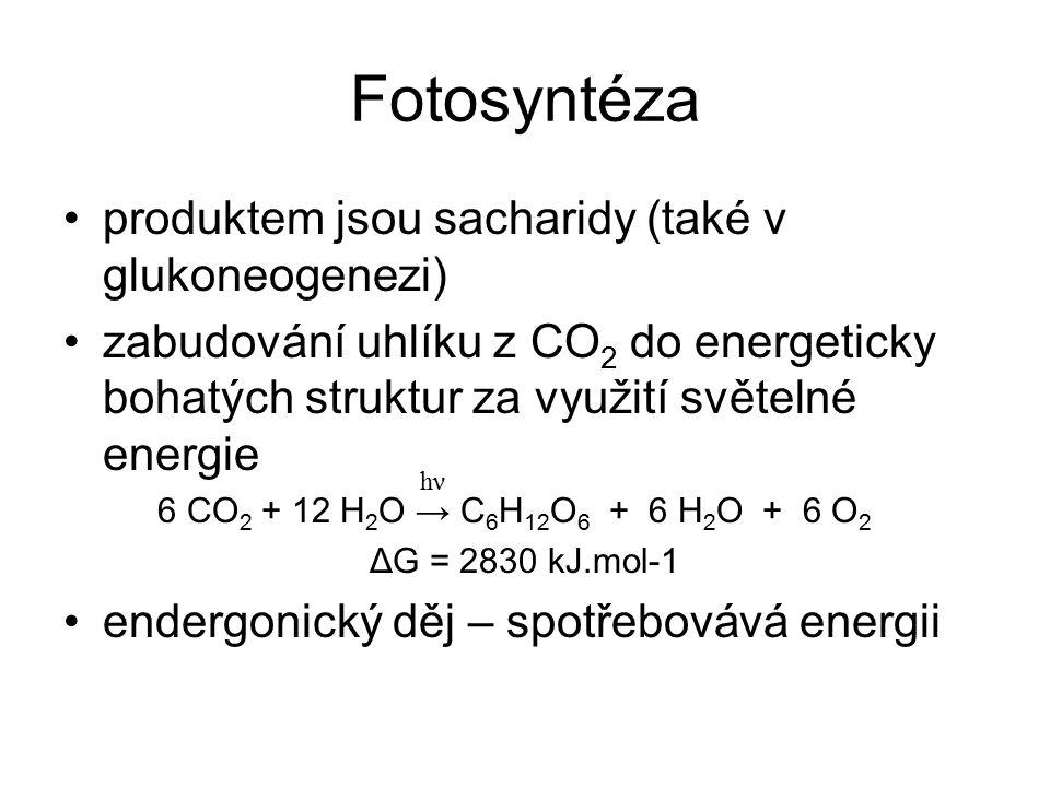 Fotosyntéza produktem jsou sacharidy (také v glukoneogenezi) zabudování uhlíku z CO 2 do energeticky bohatých struktur za využití světelné energie 6 C