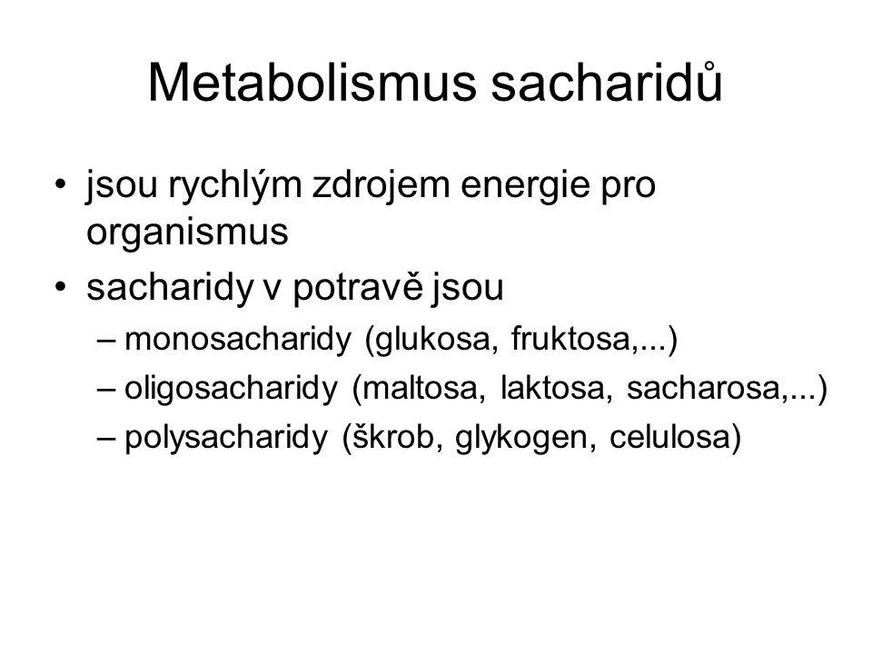 """Metabolismus sacharidů jsou organismem převáděny na monosacharidy (pomocí enzymů glykosidas) rezervní polysacharidy –jsou štěpeny fosforolyticky (v přítomnosti """"H 3 PO 4 ) na glukosa-1-fosfát monosacharidy jsou převáděny na glukosu –> syntéza glykogenu –> do krve"""