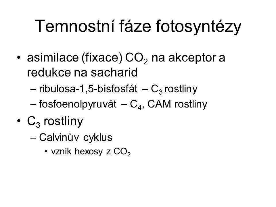 Temnostní fáze fotosyntézy asimilace (fixace) CO 2 na akceptor a redukce na sacharid –ribulosa-1,5-bisfosfát – C 3 rostliny –fosfoenolpyruvát – C 4, C