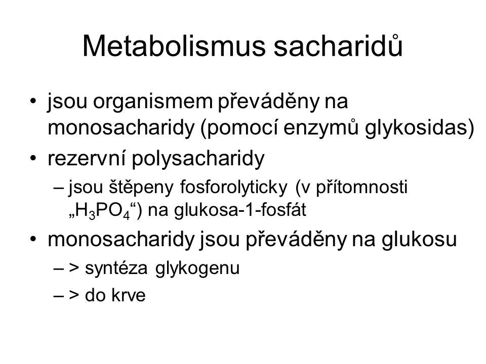 Metabolismus sacharidů jsou organismem převáděny na monosacharidy (pomocí enzymů glykosidas) rezervní polysacharidy –jsou štěpeny fosforolyticky (v př