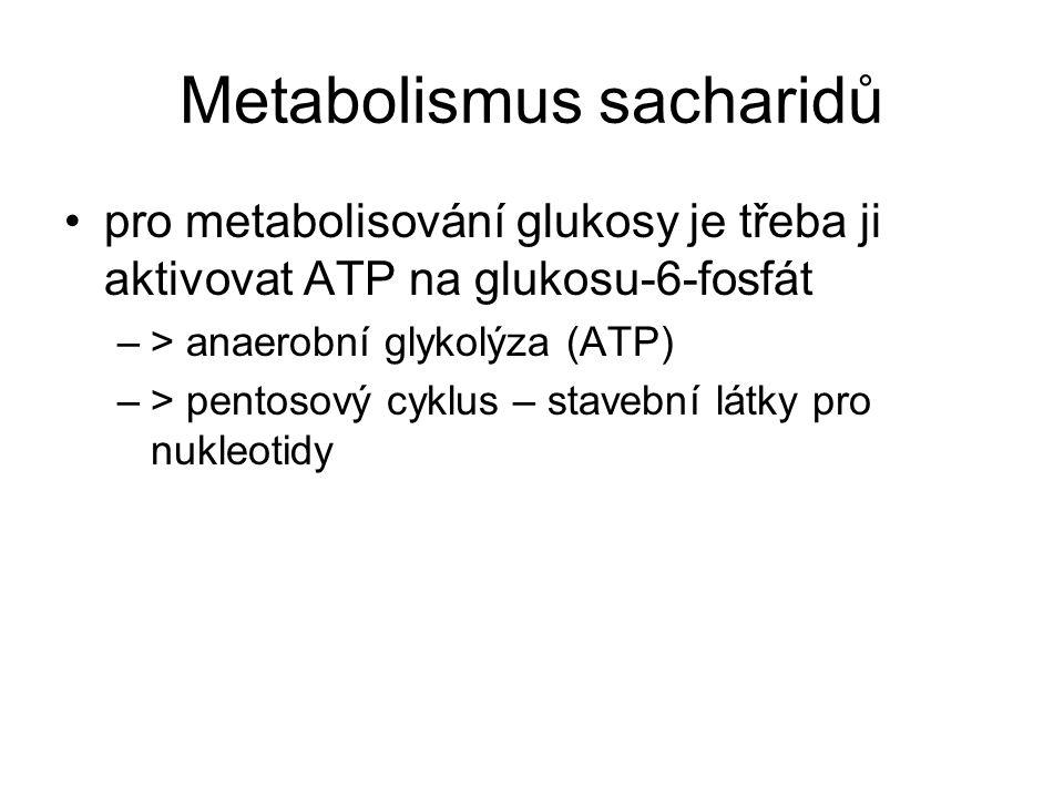 Anaerobní glykolýza odbourání glukosy na pyruvát a energii 3 fáze –přeměna glukosy na glyceraldehyd-3-fosfát –dehydrogenace na fosfoglycerát (zisk energie) –přeměna na pyruvát energetická bilance aktivace glukosy (2x ATP) 2x syntéza 2 ATP (4 ATP) = zisk 2 ATP