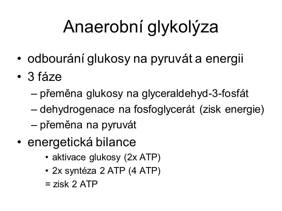 Anaerobní glykolýza odbourání glukosy na pyruvát a energii 3 fáze –přeměna glukosy na glyceraldehyd-3-fosfát –dehydrogenace na fosfoglycerát (zisk ene