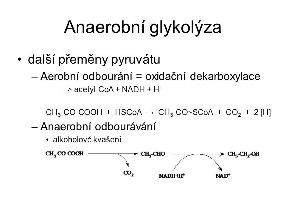Anaerobní glykolýza další přeměny pyruvátu –Aerobní odbourání = oxidační dekarboxylace –> acetyl-CoA + NADH + H + CH 3 -CO-COOH + HSCoA → CH 3 -CO~SCo