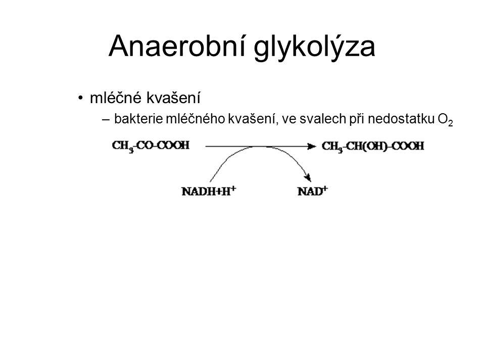 Anaerobní glykolýza mléčné kvašení –bakterie mléčného kvašení, ve svalech při nedostatku O 2