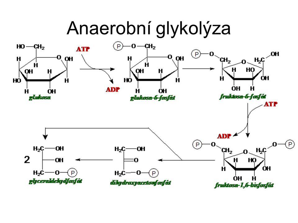 2 fáze –světelná fáze – vznik ATP, NADPH + H +, O 2 cyklický transport e - - cyklická fosforylace necyklický transport e - - necyklická fosforylace fotolýza vody –temnostní fáze – asimilace CO 2 do organických struktur