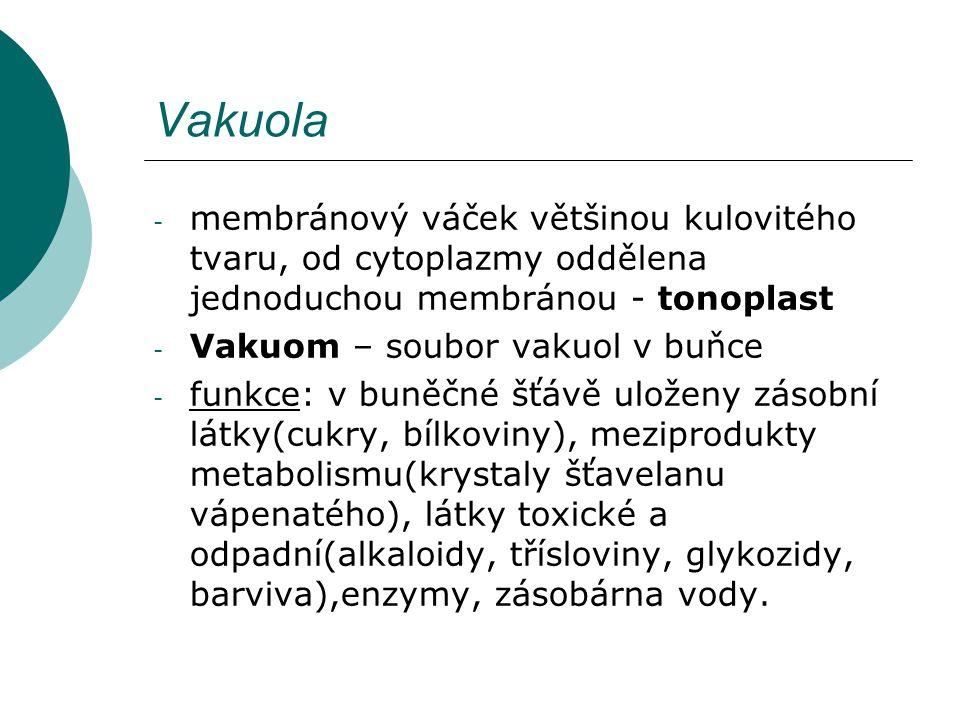 Vakuola - membránový váček většinou kulovitého tvaru, od cytoplazmy oddělena jednoduchou membránou - tonoplast - Vakuom – soubor vakuol v buňce - funk