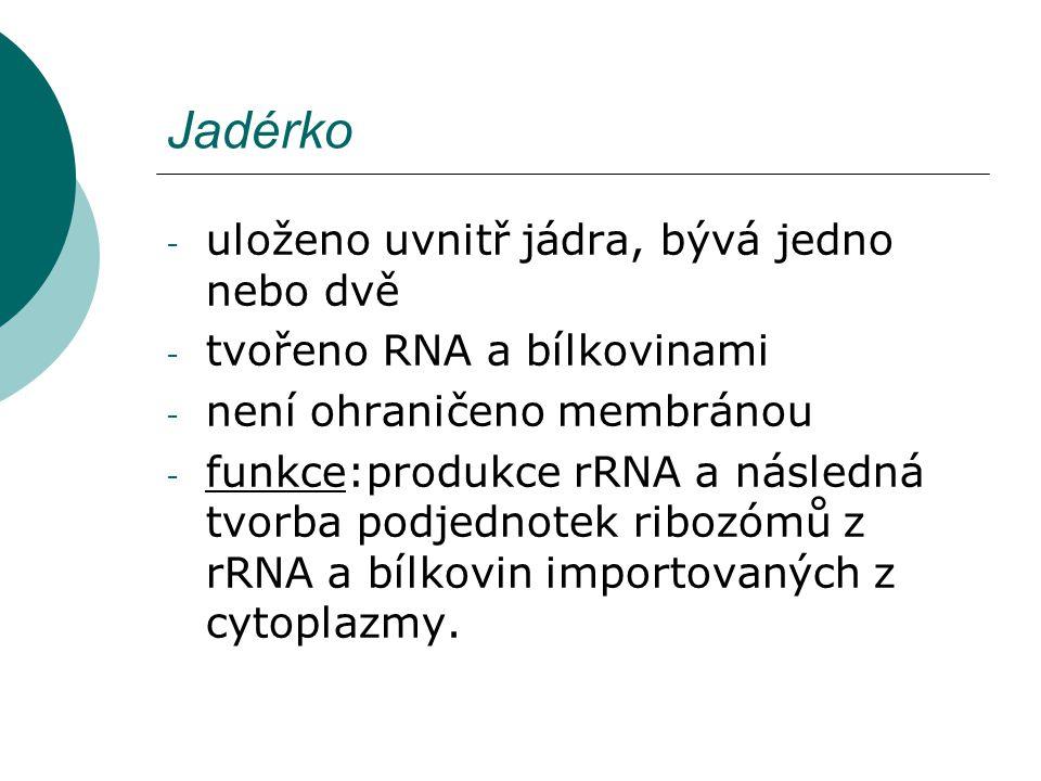 Jadérko - uloženo uvnitř jádra, bývá jedno nebo dvě - tvořeno RNA a bílkovinami - není ohraničeno membránou - funkce:produkce rRNA a následná tvorba p