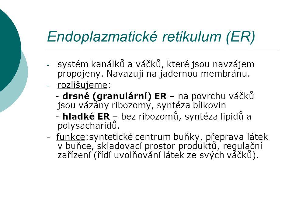 Endoplazmatické retikulum (ER) - systém kanálků a váčků, které jsou navzájem propojeny. Navazují na jadernou membránu. - rozlišujeme: - drsné (granulá