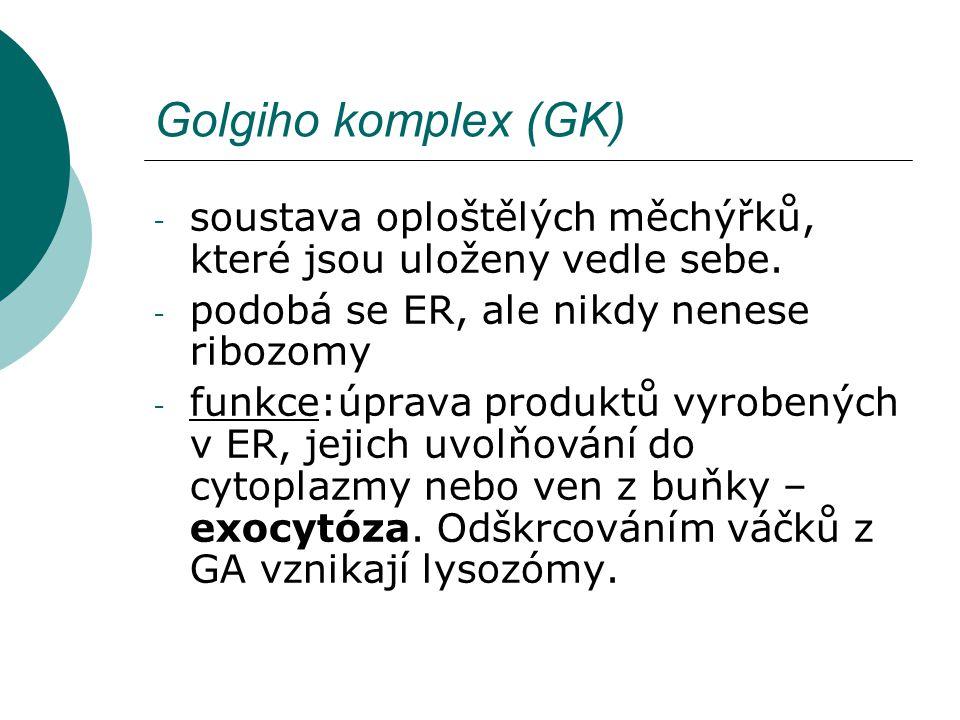 Golgiho komplex (GK) - soustava oploštělých měchýřků, které jsou uloženy vedle sebe. - podobá se ER, ale nikdy nenese ribozomy - funkce:úprava produkt