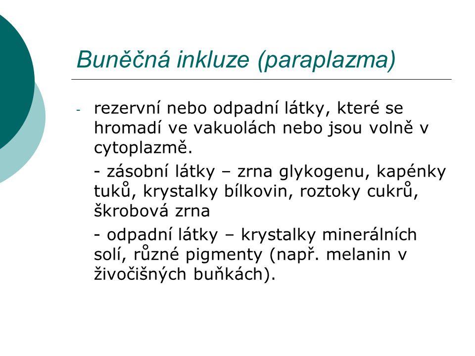 Buněčná inkluze (paraplazma) - rezervní nebo odpadní látky, které se hromadí ve vakuolách nebo jsou volně v cytoplazmě. - zásobní látky – zrna glykoge