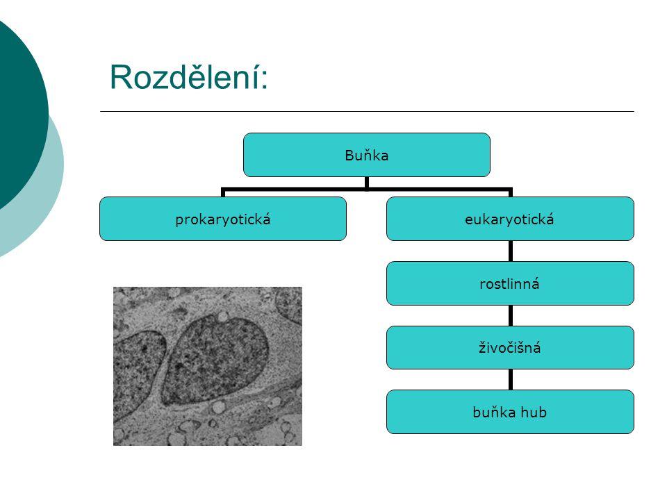 Prokaryota (Procaryotae) Prokaryota je jednodušší než eukaryota.