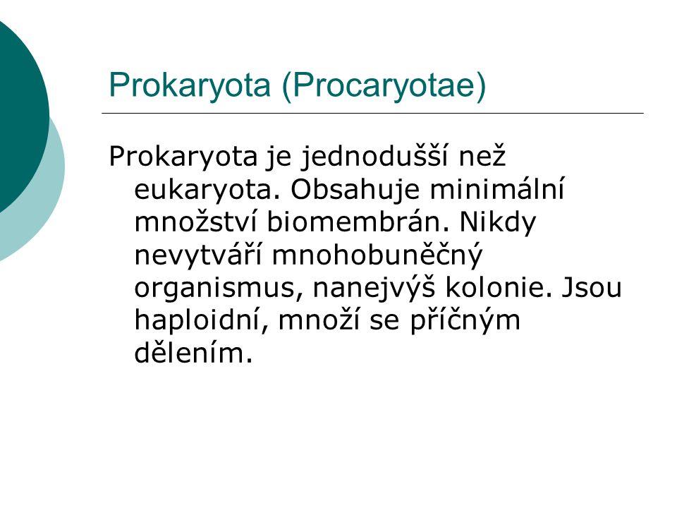 Prokaryota (Procaryotae) Prokaryota je jednodušší než eukaryota. Obsahuje minimální množství biomembrán. Nikdy nevytváří mnohobuněčný organismus, nane