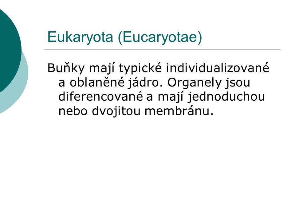 Eukaryota (Eucaryotae) Buňky mají typické individualizované a oblaněné jádro. Organely jsou diferencované a mají jednoduchou nebo dvojitou membránu.