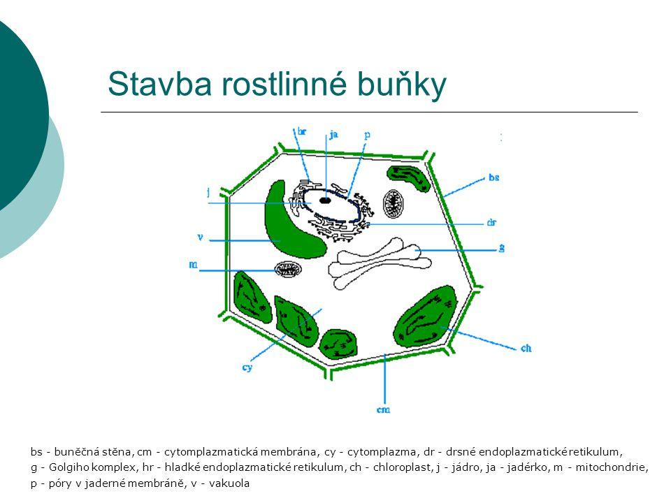 Stavba rostlinné buňky bs - buněčná stěna, cm - cytomplazmatická membrána, cy - cytomplazma, dr - drsné endoplazmatické retikulum, g - Golgiho komplex