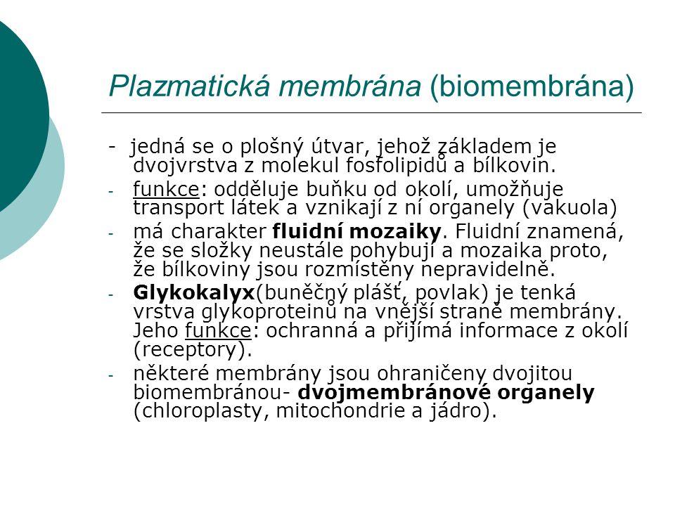 - jedná se o plošný útvar, jehož základem je dvojvrstva z molekul fosfolipidů a bílkovin. - funkce: odděluje buňku od okolí, umožňuje transport látek
