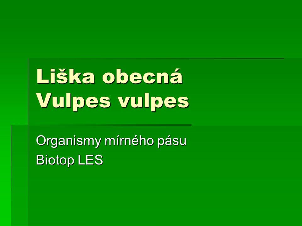 Liška obecná Vulpes vulpes Organismy mírného pásu Biotop LES