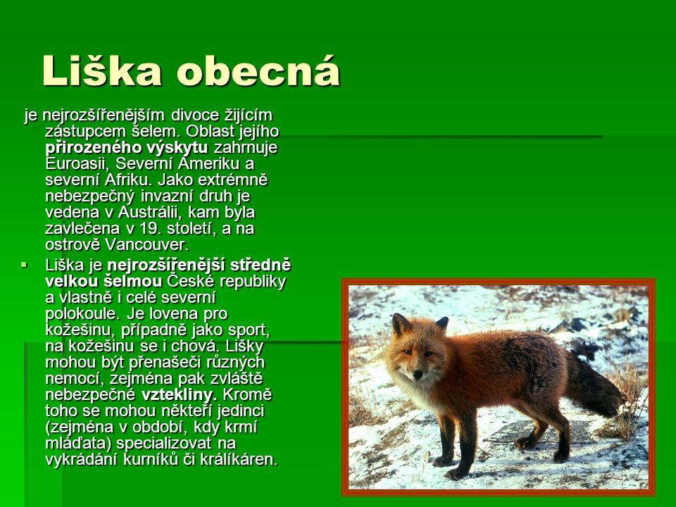 Liška obecná je nejrozšířenějším divoce žijícím zástupcem šelem. Oblast jejího přirozeného výskytu zahrnuje Euroasii, Severní Ameriku a severní Afriku