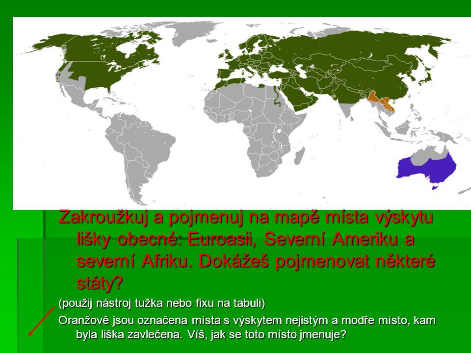 Zakroužkuj a pojmenuj na mapě místa výskytu lišky obecné: Euroasii, Severní Ameriku a severní Afriku.