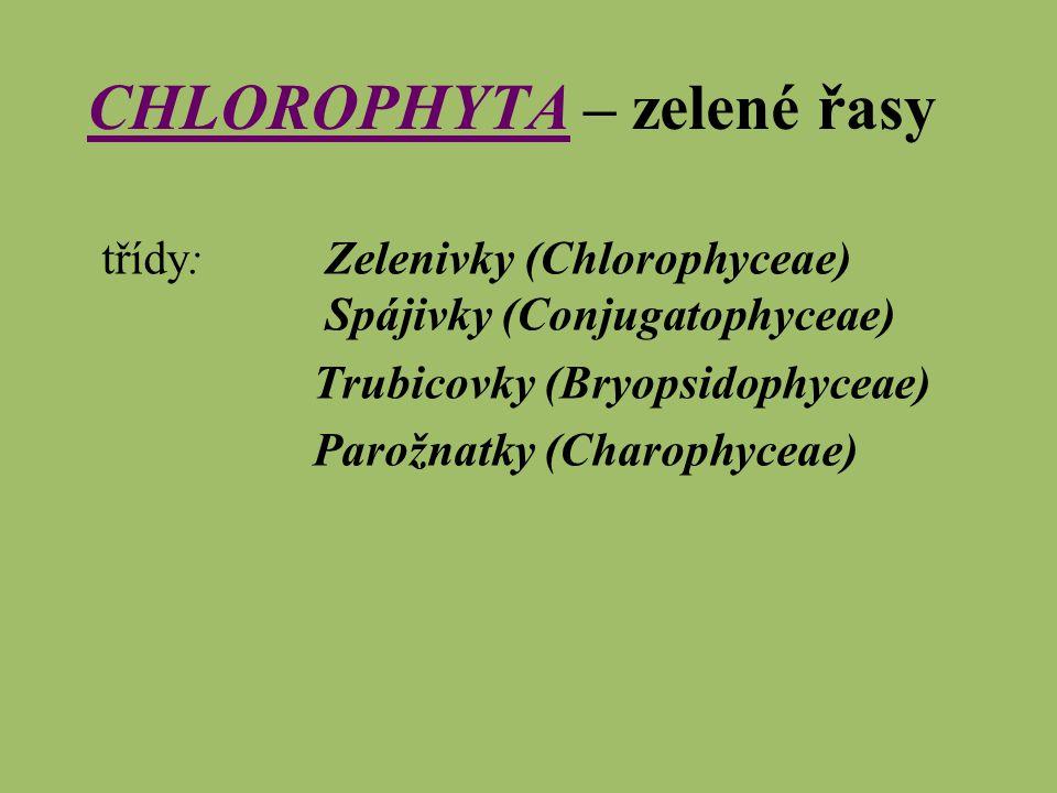 CHLOROPHYTACHLOROPHYTA – zelené řasy třídy: Zelenivky (Chlorophyceae) Spájivky (Conjugatophyceae) Trubicovky (Bryopsidophyceae) Parožnatky (Charophyce