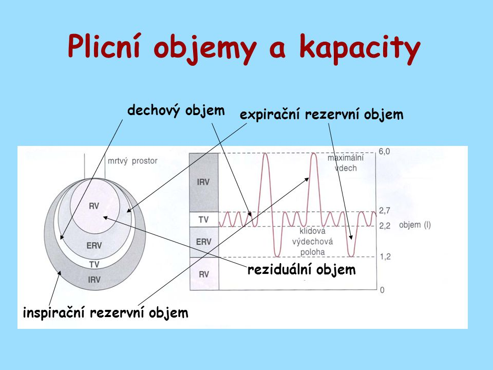 - plicní objemy měřitelné spirometrem (VT,IRV,ERV) - RV, FRC - měřitelné He-dilucí, pletysmografem - anatomický mrtvý prostor - závislost efektivní ventilace na frekvenci dýchání, dechová práce - funkční mrtvý prostor, nedokonalá perfúze Shrnutí