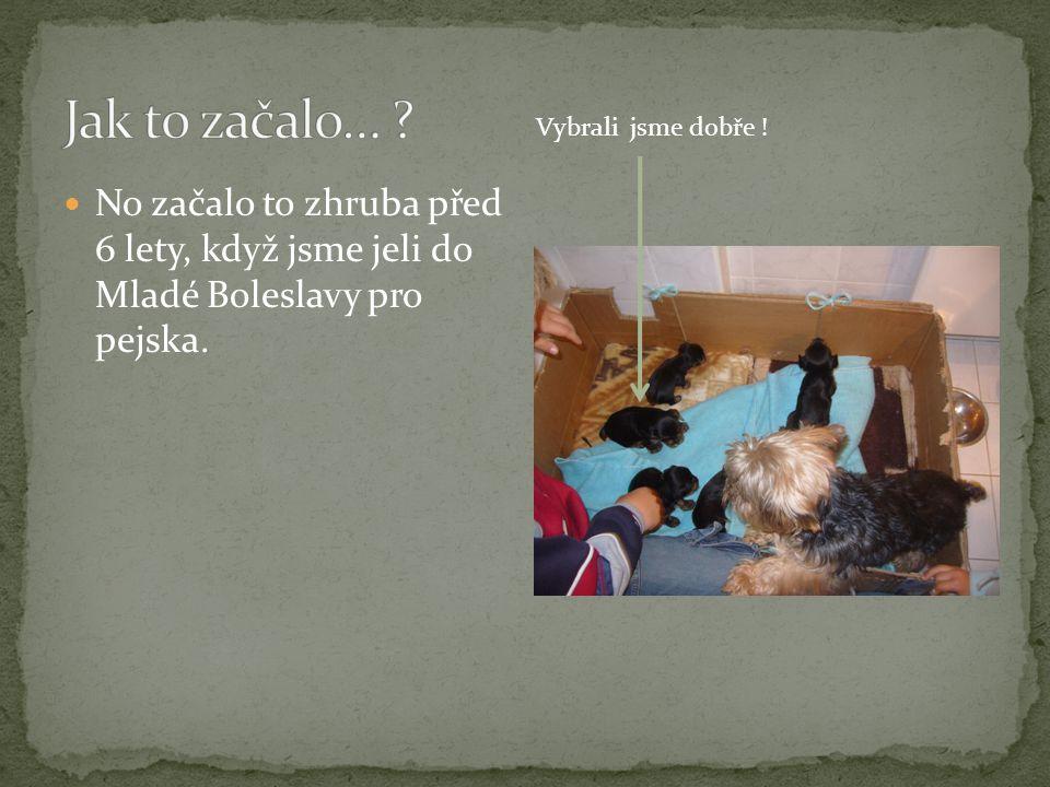 No začalo to zhruba před 6 lety, když jsme jeli do Mladé Boleslavy pro pejska. Vybrali jsme dobře !