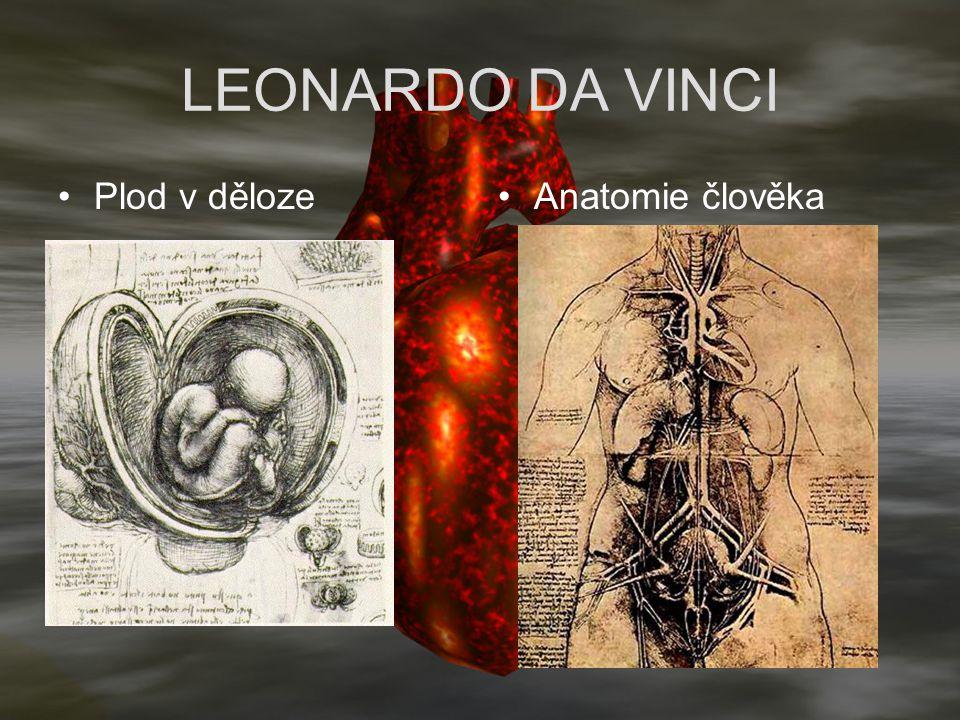 LEONARDO DA VINCI Plod v dělozeAnatomie člověka