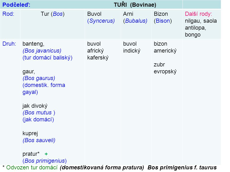 Podčeleď: TUŘI (Bovinae) Rod:Tur (Bos)Buvol (Syncerus) Arni (Bubalus) Bizon (Bison) Další rody: nilgau, saola antilopa, bongo Druh:banteng, (Bos javan