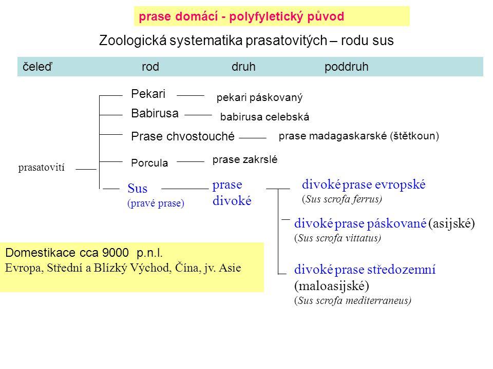 Zoologická systematika prasatovitých – rodu sus prasatovití Sus (pravé prase) divoké prase evropské (Sus scrofa ferrus) divoké prase středozemní (malo