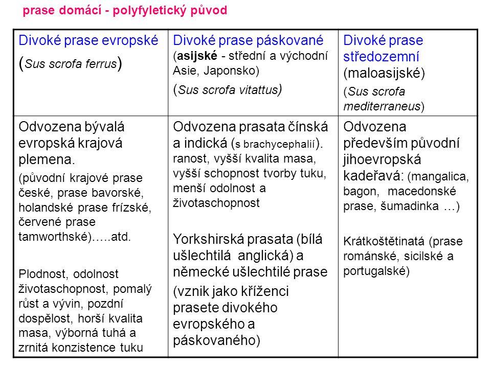 Divoké prase evropské ( Sus scrofa ferrus ) Divoké prase páskované (asijské - střední a východní Asie, Japonsko) ( Sus scrofa vitattus ) Divoké prase