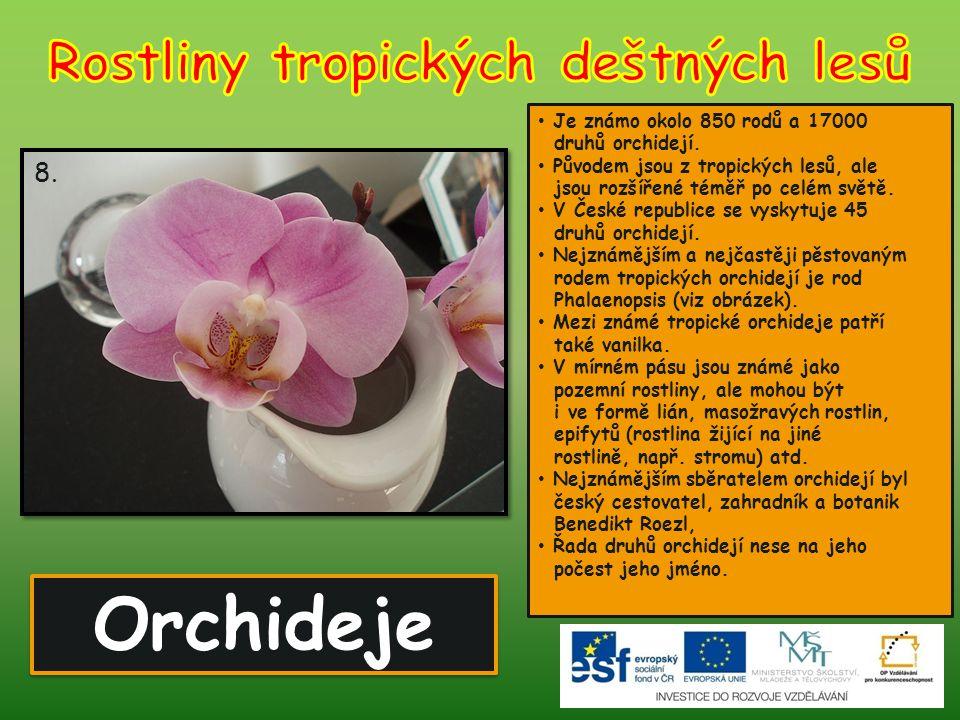 Orchideje 8. Je známo okolo 850 rodů a 17000 druhů orchidejí. Původem jsou z tropických lesů, ale jsou rozšířené téměř po celém světě. V České republi