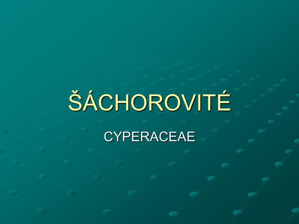 ŠÁCHOROVITÉ CYPERACEAE
