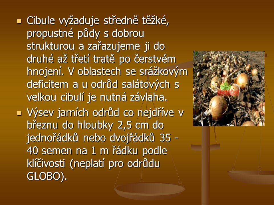 Cibule vyžaduje středně těžké, propustné půdy s dobrou strukturou a zařazujeme ji do druhé až třetí tratě po čerstvém hnojení.