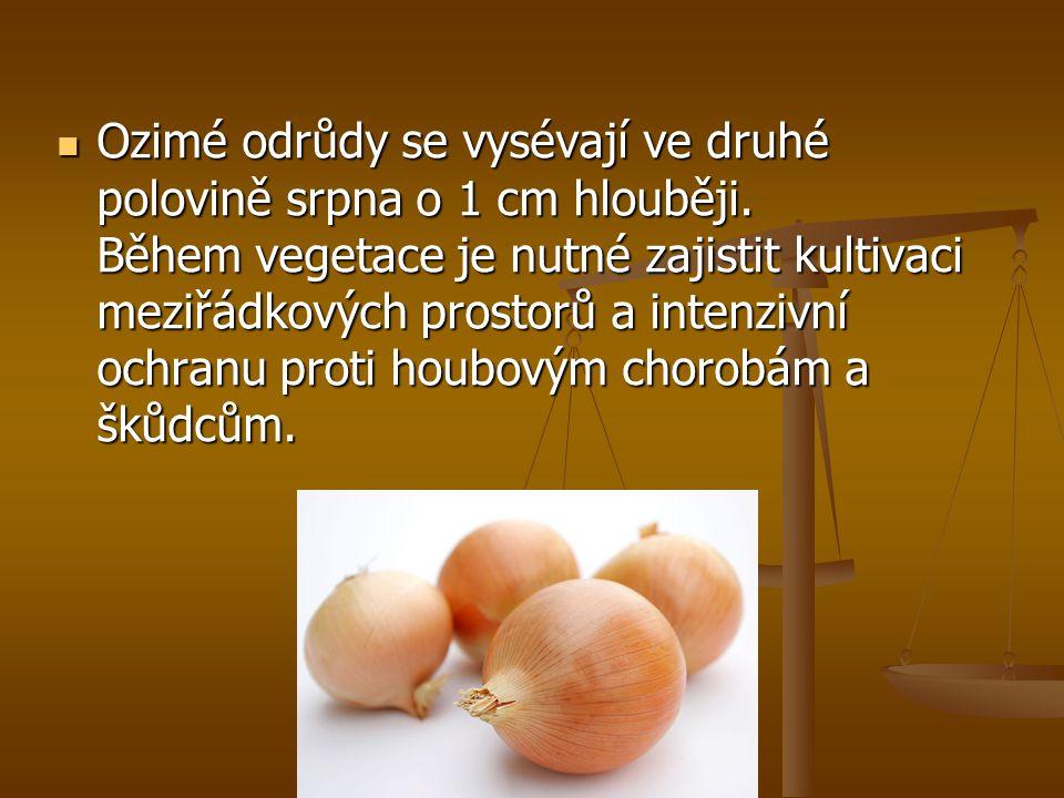Cibule jako lék Cibule je dobrá jako lék na kašel a rakovinu je to nedobrá ale zdravá zelenina.